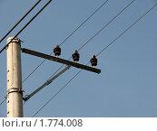 Провода связи на фоне голубого неба. Стоковое фото, фотограф Марков Николай / Фотобанк Лори
