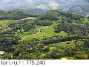 Купить «Чайные плантации на холмах в Сочи», фото № 1775240, снято 16 июня 2010 г. (c) Анна Мартынова / Фотобанк Лори