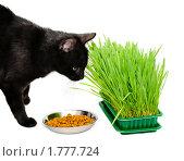 Кошка ест сухой корм и траву. Стоковое фото, фотограф Дарья Мирошникова / Фотобанк Лори