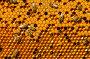 Соты с пергой и пчелиным расплодом, фото № 1780076, снято 13 июня 2010 г. (c) Андрей Давиденко / Фотобанк Лори