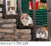 Кошачья лесенка. Стоковое фото, фотограф Арти Homa / Фотобанк Лори