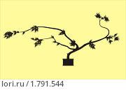 Бонсай, черный силуэт на желтом фоне. Стоковая иллюстрация, иллюстратор Oksana Boborykina / Фотобанк Лори