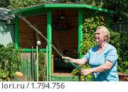 Купить «Женщина на даче поливает», фото № 1794756, снято 23 июня 2010 г. (c) Ирина Завьялова / Фотобанк Лори