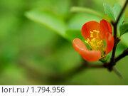 Оранжевый цветок. Стоковое фото, фотограф Мария Калиниченко / Фотобанк Лори