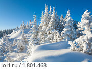 Купить «Зимний пейзаж. Карпаты, гора Кукол», фото № 1801468, снято 8 марта 2010 г. (c) Юрий Брыкайло / Фотобанк Лори