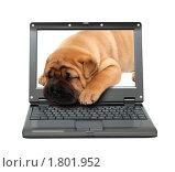 Купить «Шар-пей - щенок спит на клавиатуре ноутбука», фото № 1801952, снято 10 января 2009 г. (c) Михаил Коханчиков / Фотобанк Лори