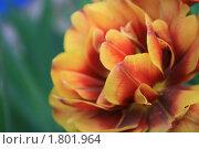Цветок. Стоковое фото, фотограф Юрий Токарь / Фотобанк Лори