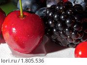 Летние ягоды. Стоковое фото, фотограф Фирсова Ольга / Фотобанк Лори