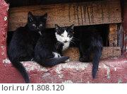 Купить «Котята», фото № 1808120, снято 28 июня 2010 г. (c) Михаил Митин / Фотобанк Лори