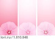 Купить «Три баннера с цветками петуньи», иллюстрация № 1810848 (c) Лукиянова Наталья / Фотобанк Лори