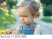 Купить «Мой маленький сад», фото № 1816360, снято 10 июня 2010 г. (c) yarruta / Фотобанк Лори