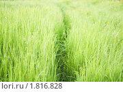 Тропа. Стоковое фото, фотограф Кира Малиновская / Фотобанк Лори