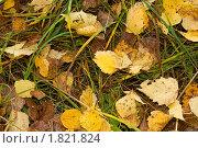 Осенняя листва. Стоковое фото, фотограф Мозымов Александр / Фотобанк Лори