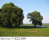 Пришло лето. Стоковое фото, фотограф Владимир Далецкий / Фотобанк Лори