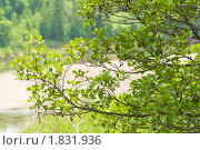 Ольха. Стоковое фото, фотограф Николай Бирюков / Фотобанк Лори