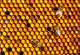 Соты, фото № 1834204, снято 11 июля 2010 г. (c) Андрей Давиденко / Фотобанк Лори