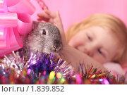 Купить «Девочка с кроликом», фото № 1839852, снято 19 февраля 2010 г. (c) Майя Крученкова / Фотобанк Лори