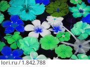 Купить «Экзотические цветы», фото № 1842788, снято 9 января 2010 г. (c) Лифанцева Елена / Фотобанк Лори