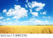Купить «Золотистое пшеничное поле», фото № 1844516, снято 27 июня 2010 г. (c) Евгений Захаров / Фотобанк Лори