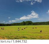 Купить «Заготовка сена в ленинградской области», фото № 1844732, снято 17 июля 2010 г. (c) Валентина Разумова / Фотобанк Лори