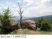 Купить «Сухое дерево между двух валунов на Демерджи над обрывом», фото № 1849572, снято 9 июля 2010 г. (c) Григорий Стоякин / Фотобанк Лори