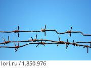 Купить «Колючая проволока на фоне голубого неба», фото № 1850976, снято 18 июля 2010 г. (c) Яшукова Анна / Фотобанк Лори