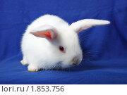 Купить «Кролик домашний», фото № 1853756, снято 19 мая 2010 г. (c) Василий Вишневский / Фотобанк Лори
