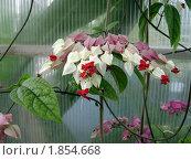 Тропический цветок. Стоковое фото, фотограф Марина Трудова / Фотобанк Лори