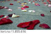 Купить «Лепестки роз перед ЗАГСом», фото № 1855616, снято 21 июля 2010 г. (c) Момотюк Сергей / Фотобанк Лори