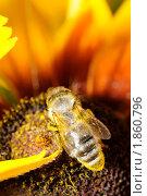 Пчела и цветок. Стоковое фото, фотограф Петр Крупенников / Фотобанк Лори