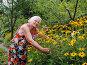 Пенсионерка любуется выращенной рудбекией на дачном участке, эксклюзивное фото № 1861364, снято 25 июля 2010 г. (c) Анна Мартынова / Фотобанк Лори