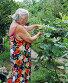 Пенсионерка на даче у инжира, эксклюзивное фото № 1861408, снято 25 июля 2010 г. (c) Анна Мартынова / Фотобанк Лори