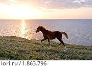 Купить «Лошадь на берегу моря», фото № 1863796, снято 4 мая 2010 г. (c) Иван Нестеров / Фотобанк Лори