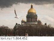 Купить «Чайка. Санкт-Петербург», эксклюзивное фото № 1864452, снято 14 апреля 2010 г. (c) Александр Алексеев / Фотобанк Лори