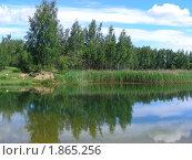 Купить «Летний пейзаж», эксклюзивное фото № 1865256, снято 10 июня 2010 г. (c) lana1501 / Фотобанк Лори