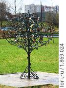 Дерево новобрачных. Стоковое фото, фотограф Максим Сидоров / Фотобанк Лори