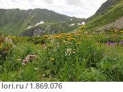 Купить «Альпийские луга в горах Архыза», фото № 1869076, снято 26 июля 2010 г. (c) Игорь Архипов / Фотобанк Лори