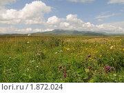 Купить «Горный пейзаж с цветами, Северный Кавказ», фото № 1872024, снято 25 июля 2010 г. (c) Игорь Архипов / Фотобанк Лори