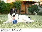 Купить «Мяч для собаки», фото № 1873764, снято 30 июля 2010 г. (c) Peredniankina / Фотобанк Лори