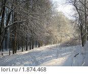 Тропинка в лесу. Стоковое фото, фотограф Татьяна Гомонова / Фотобанк Лори