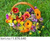 Купить «Красивые цветы в корзине», фото № 1876640, снято 10 июля 2010 г. (c) Воронин Владимир Сергеевич / Фотобанк Лори