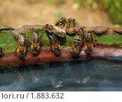 Пчелиный водопой. Стоковое фото, фотограф Михаил Дозоров / Фотобанк Лори