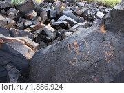 Купить «Аризона. Петроглиф - наскальный рисунок древних индейцев», фото № 1886924, снято 18 марта 2009 г. (c) Julia Nelson / Фотобанк Лори