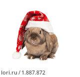 Купить «Карликовый вислоухий кролик в новогоднем колпаке», фото № 1887872, снято 4 августа 2010 г. (c) Юлия Машкова / Фотобанк Лори