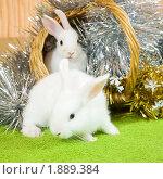 Купить «Два кролика», фото № 1889384, снято 31 июля 2010 г. (c) Яков Филимонов / Фотобанк Лори