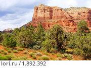 Купить «Седона - страна красных скал», фото № 1892392, снято 24 мая 2009 г. (c) Julia Nelson / Фотобанк Лори