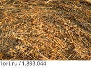 Купить «Тюк сена», фото № 1893044, снято 26 июня 2010 г. (c) Черников Роман / Фотобанк Лори