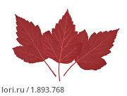 Три красных листа изолированно на белом фоне. Стоковое фото, фотограф Сергей Холодов / Фотобанк Лори