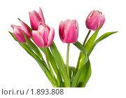 Купить «Букет тюльпанов», фото № 1893808, снято 17 февраля 2010 г. (c) Юрий Брыкайло / Фотобанк Лори