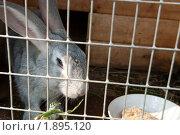 Купить «Серый кролик в клетке», фото № 1895120, снято 9 августа 2010 г. (c) Екатерина Овсянникова / Фотобанк Лори